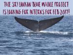 The Unorthodox Whale